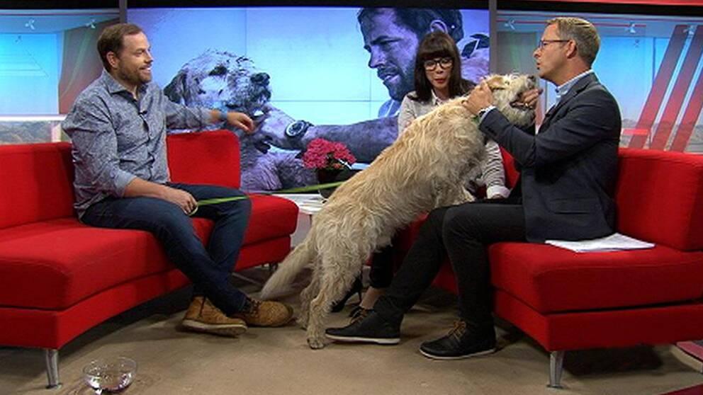 Hunden Artur i SVT:s studio.