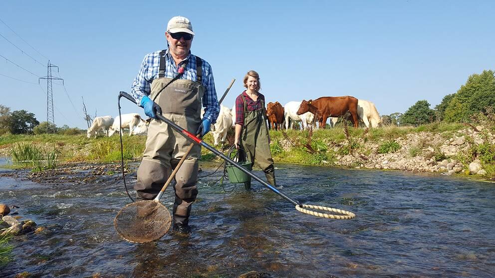 Elektriskt fiske