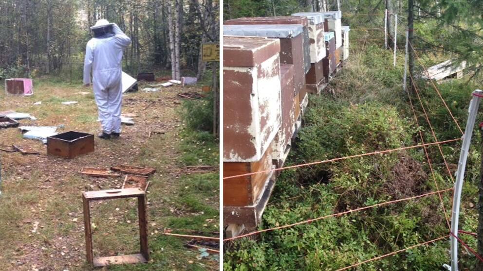 bikupor, stängsel