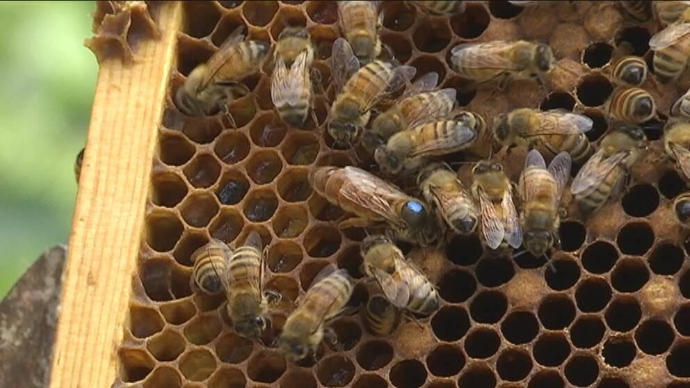 bin, biodling, honung
