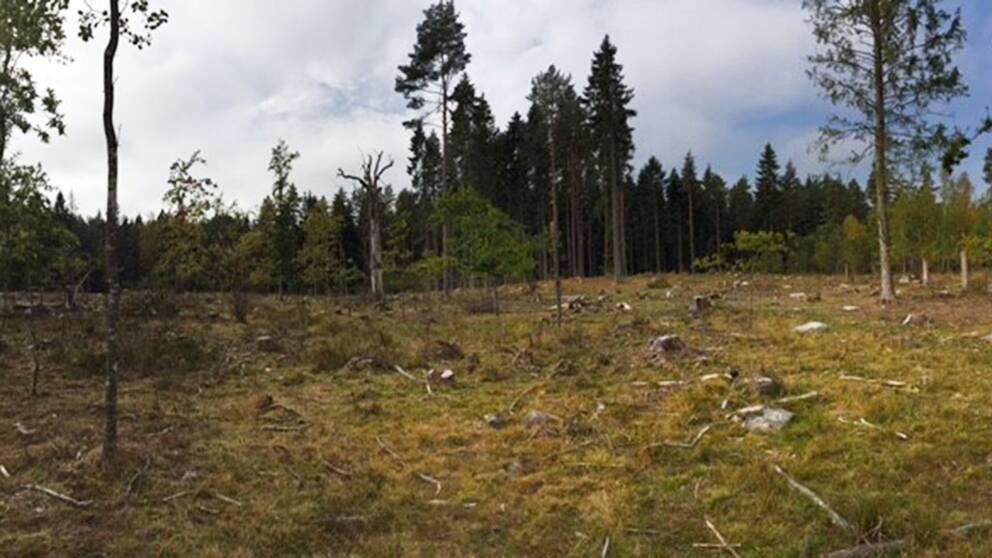 Strömsholms reservat