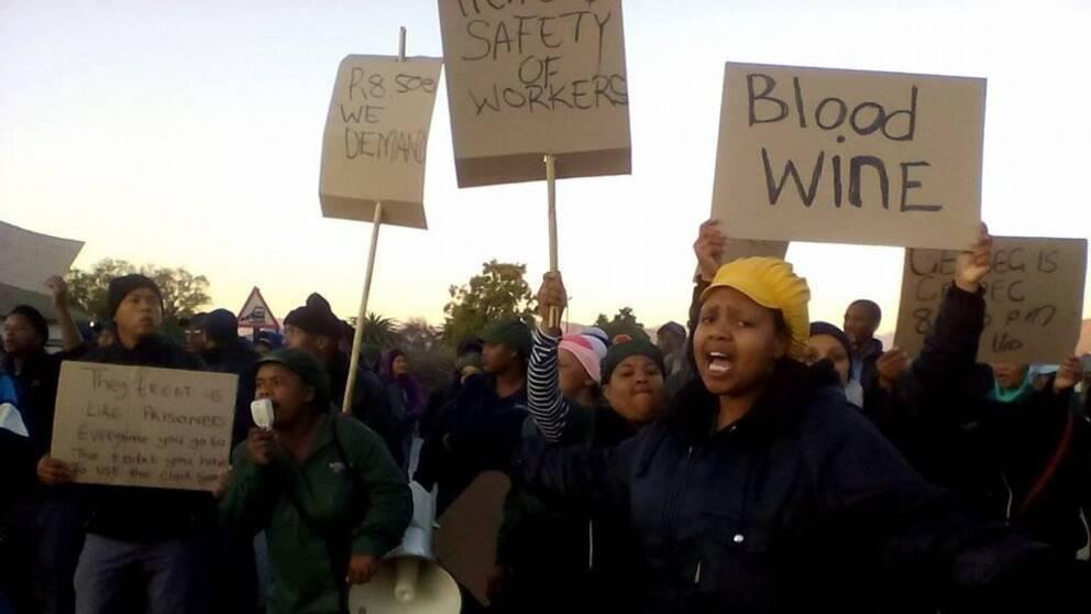 strejkande vingårdsarbetare, Sydafrika