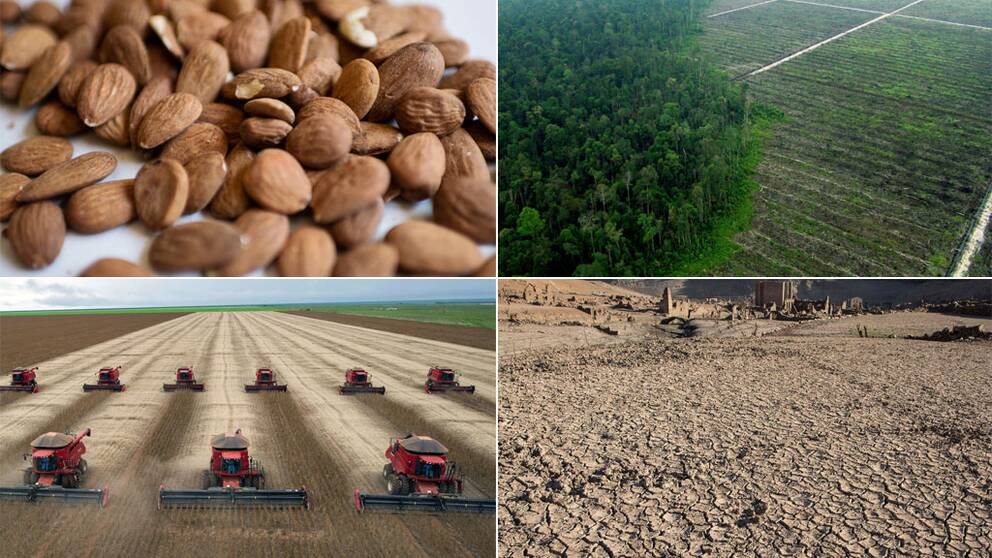 Miljö och mat