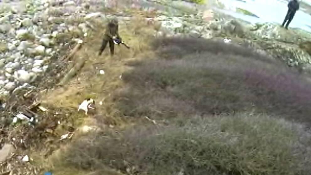 Jägare med hund jagar minkar med lövblås och hagelbössa
