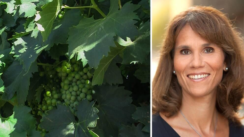 Marie Nygren, vice vd på Systembolaget besökte vingården Leeuwenkuil tidigare i år.