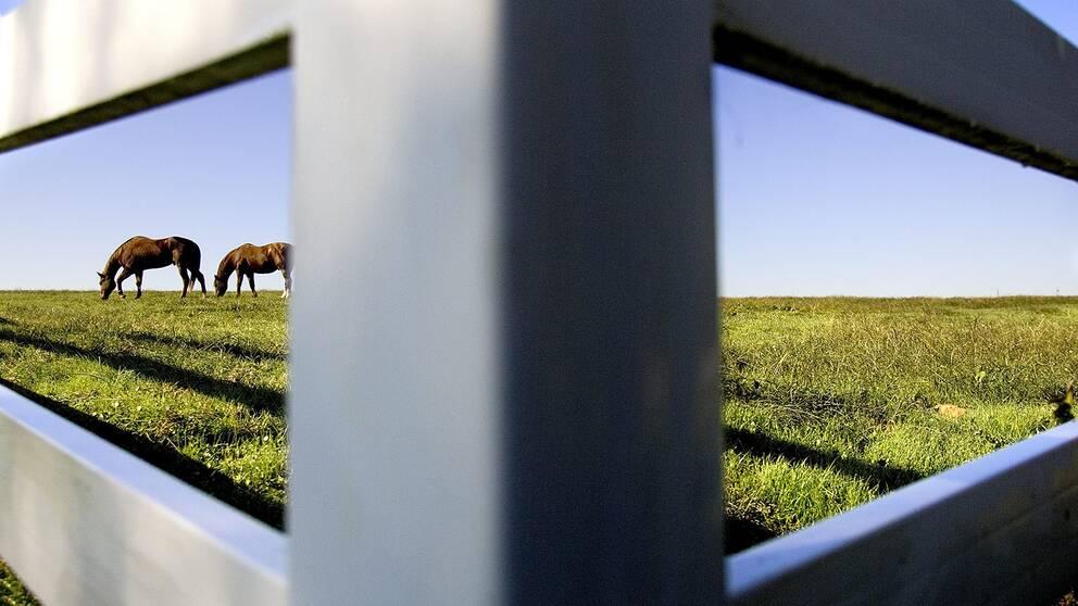 Hästägarna misstänks för djurplågeri efter att man struntat i att kalla på veterinär efter att en ponny rivit ut ögat på ett staket.