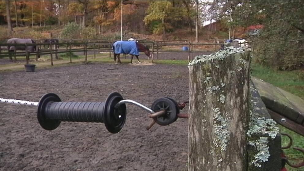 Hästar i hage vid Gunnebo