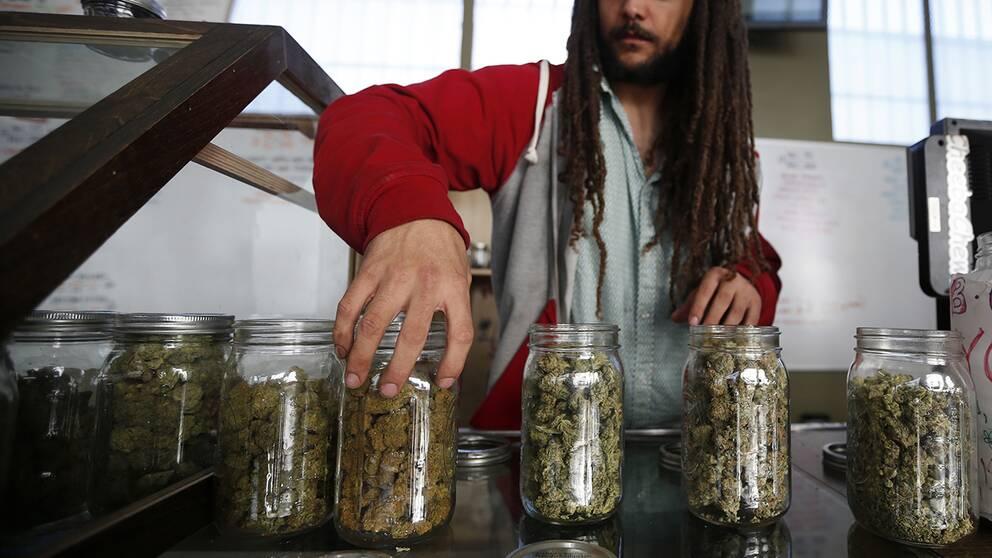Torkad cannabis för medicinskt bruk i burkar.