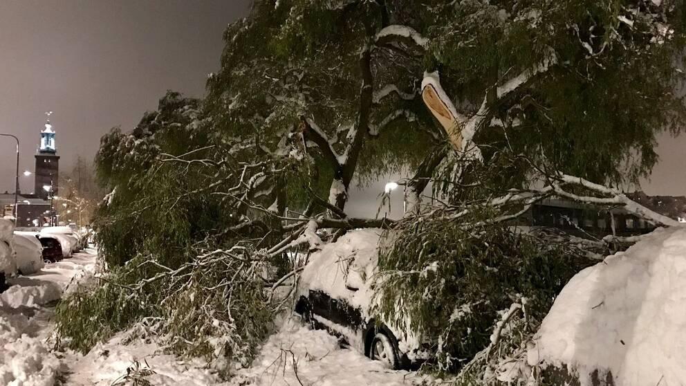 En stor trädgren har fallit ner över bilar på Norr Mälarstrand.