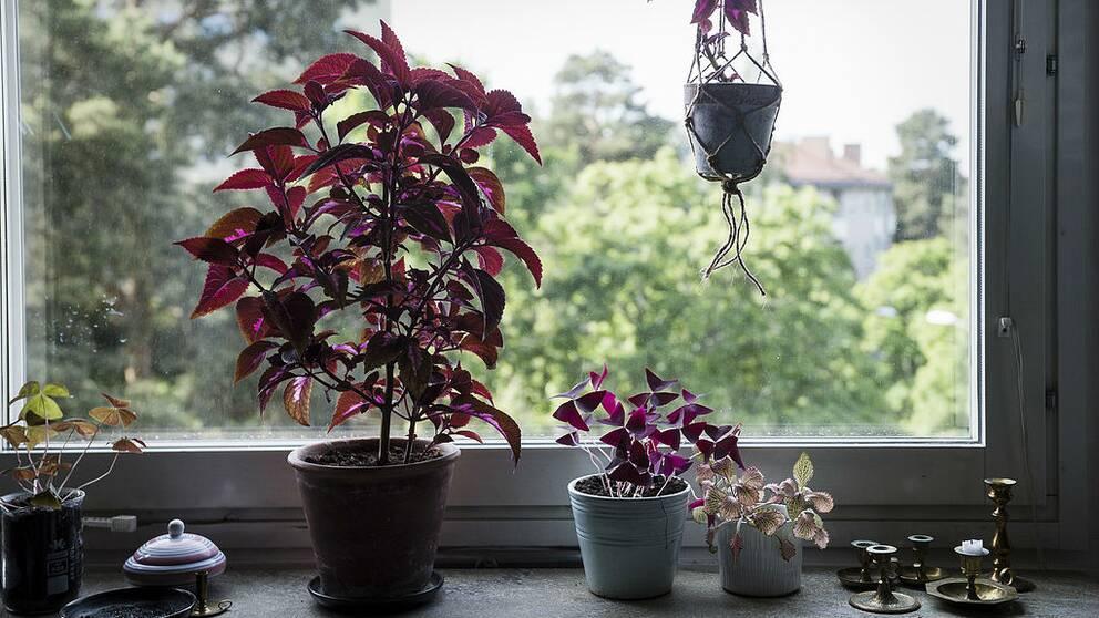 En bild på ett par växter i ett fönster.