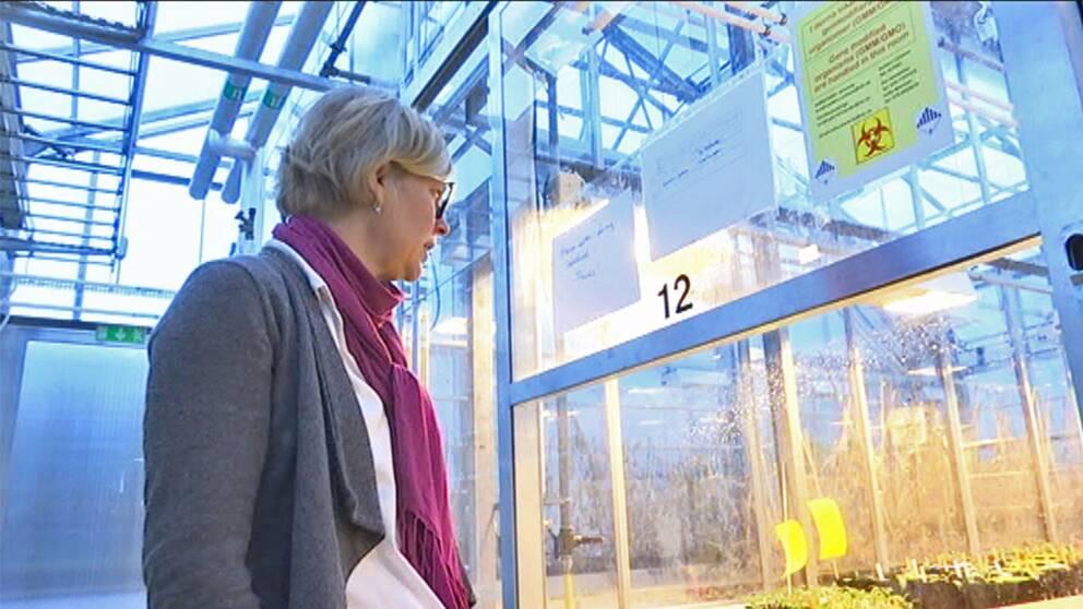 Mariette Andersson förevisar Alarps nya biotron