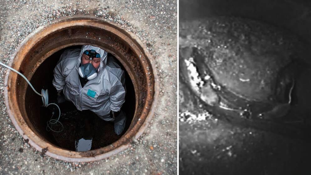 fotomontage. Till vänster en bild på en skadedjurstekniker som installerar en fälla i en avloppsbrunn. till höger en övervakningsbild från en avloppsbrunn, svartvit där råttor syns.