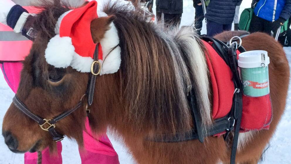 Hästen Bosse