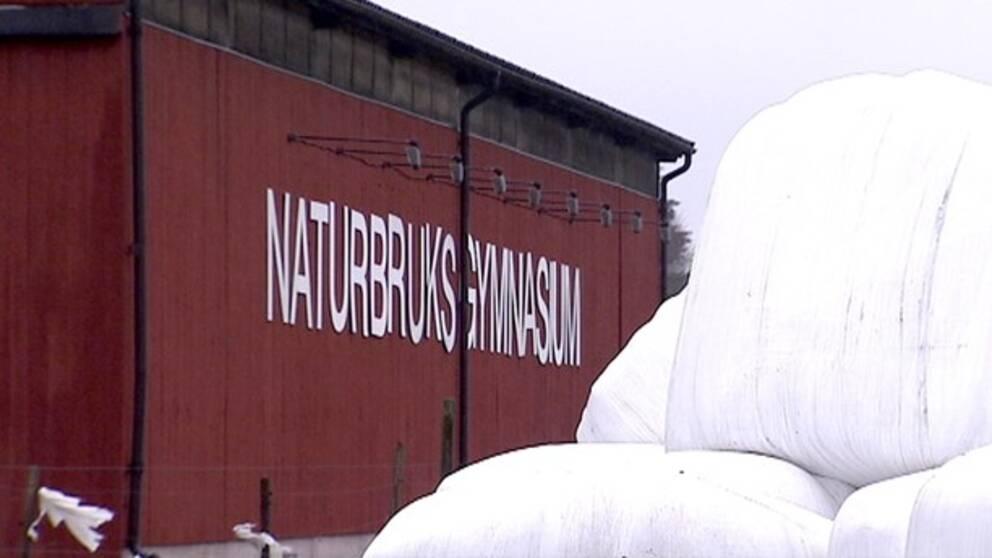 Röd ladugård/maskinhall med texten naturbruksgymnasium skrivet