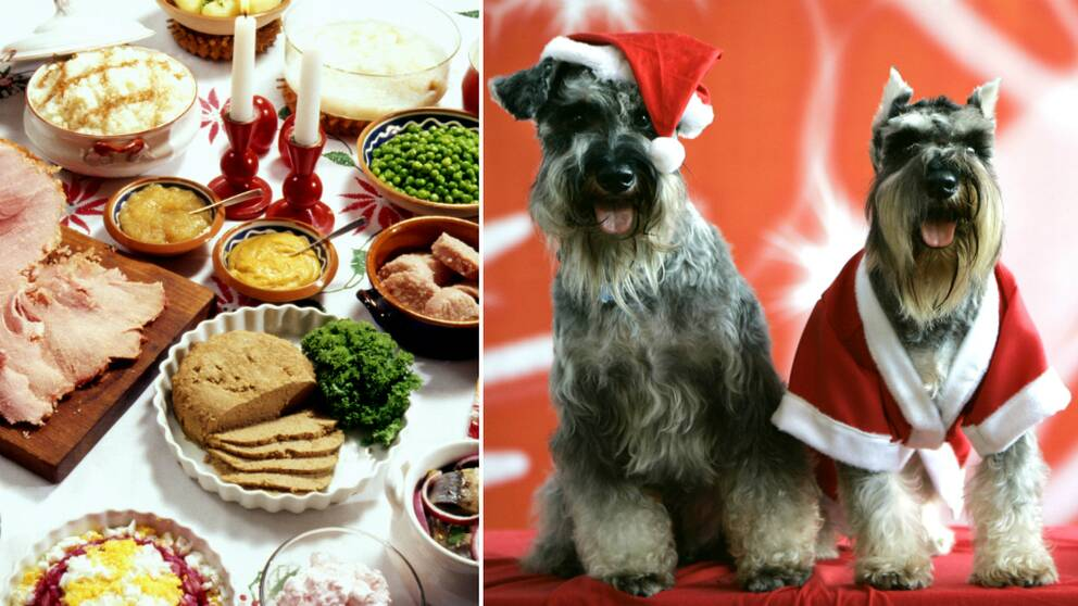 Hundratals hundar chokladförgiftas varje jul.