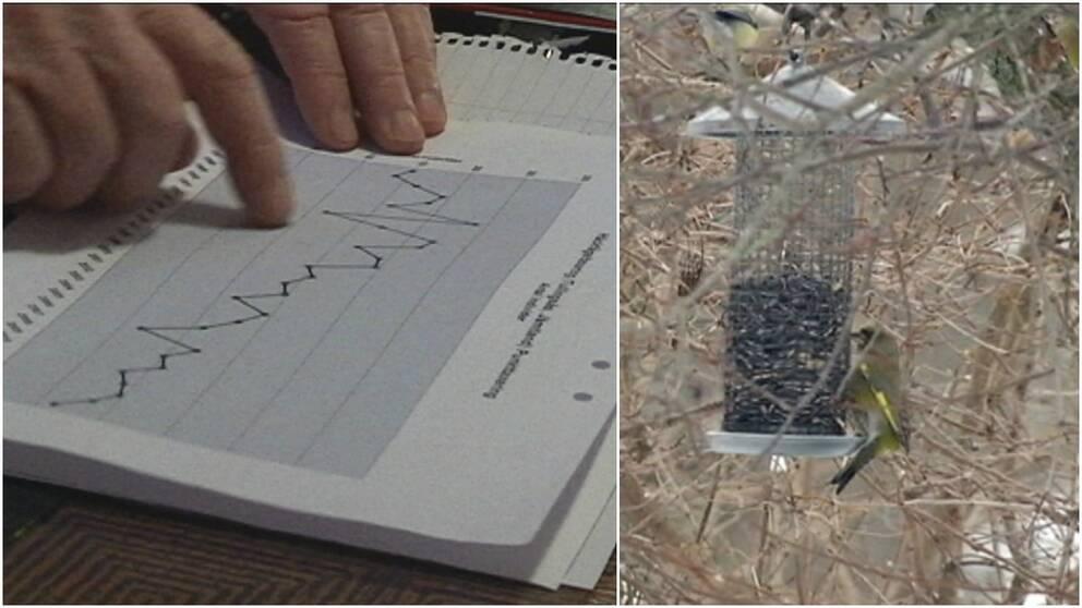 Förändrat fågelliv i Strömsund