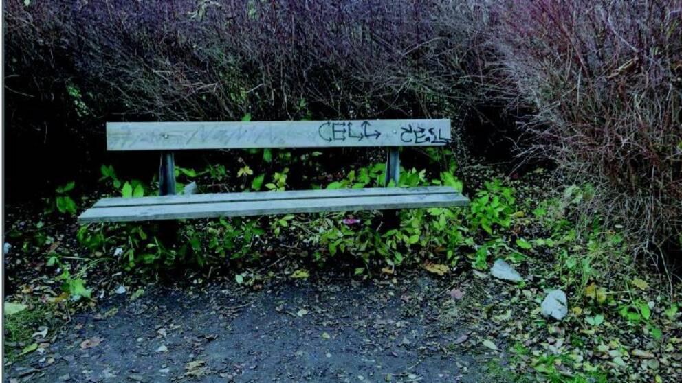 Här, nedanför bänken i parken intill länsstyrelsen, ska en av de påstådda våldtäkterna ha skett.