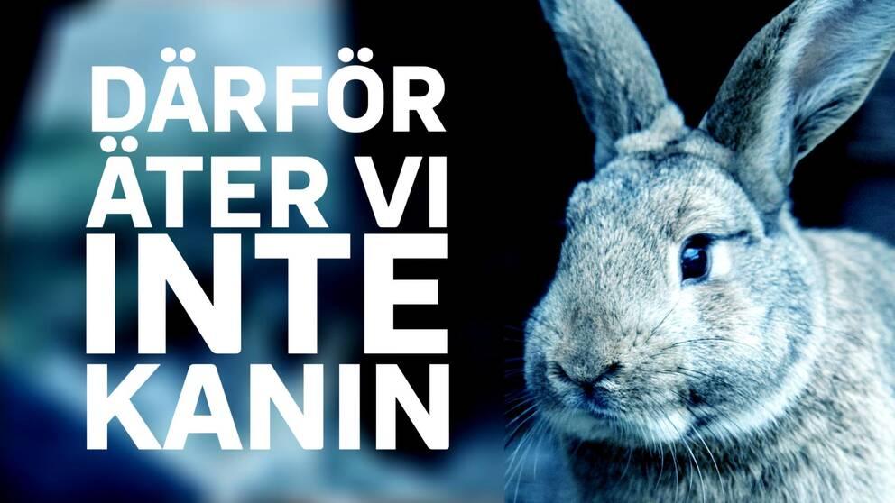 """rubrik """"därför äter vi inte kanin"""", kanin monochrom"""
