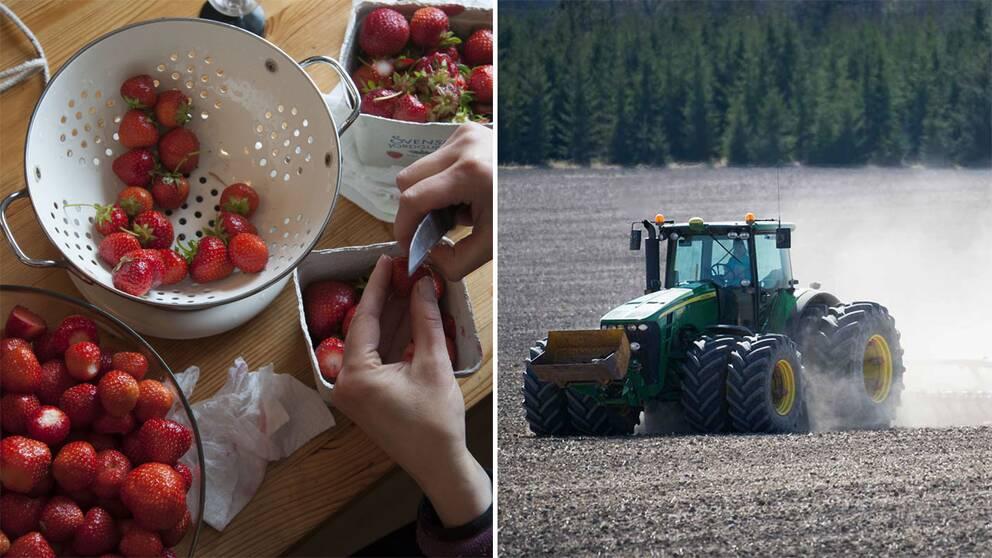 Jordgubbar och en traktor.