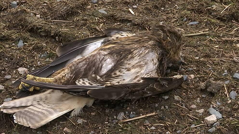 Nu hoppas ornitologerna på olika lösningar för att minska fågeldöden.
