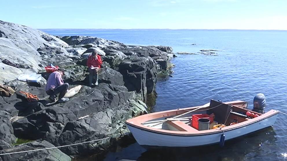 båt, skärgård kobbe