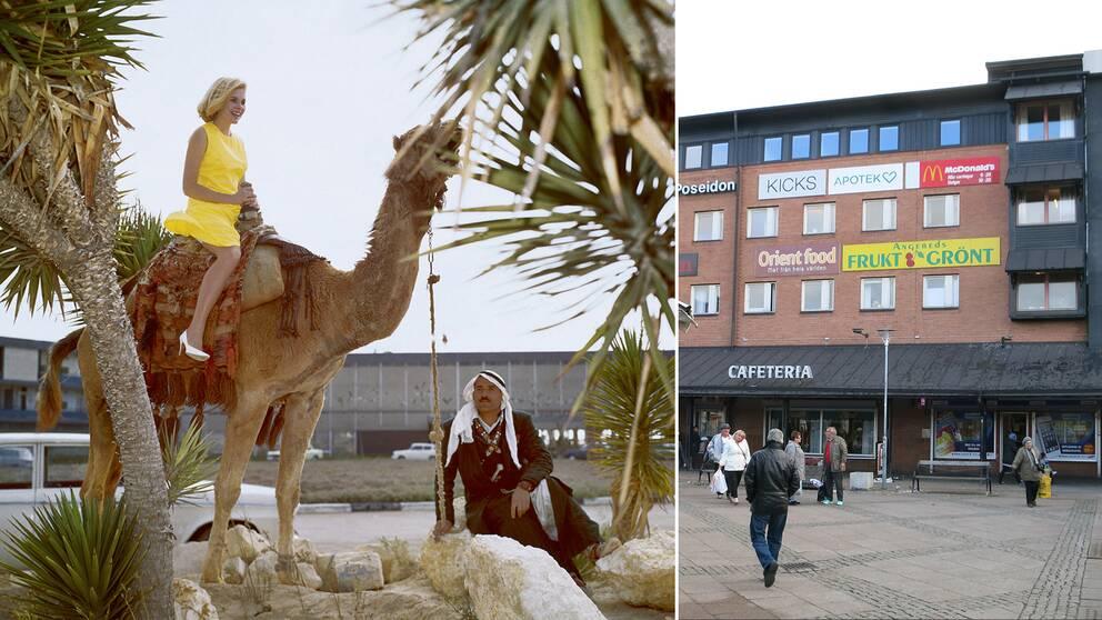 Angereds centrum, och en kamel.