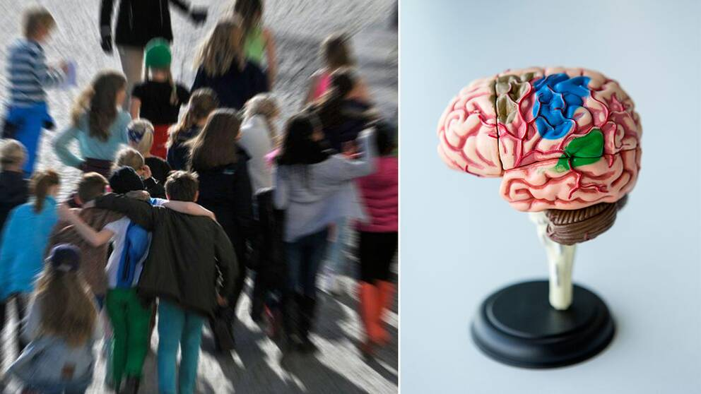 Bild på människor och en hjärna.