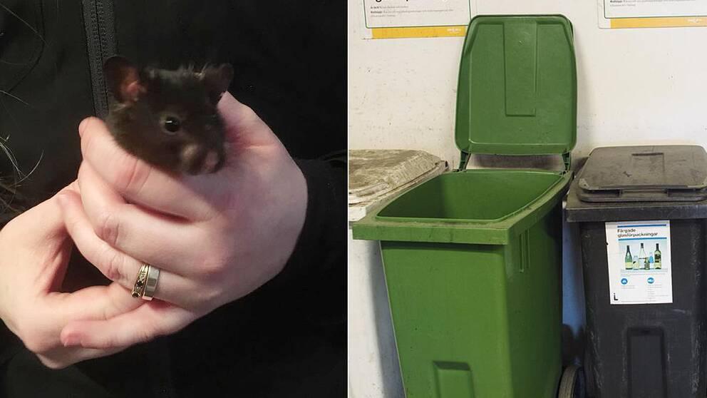 Här är en av hamstrarna som lämnades att dö i ett soprum.