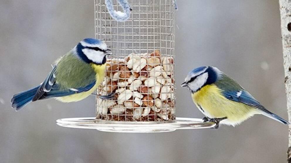 har fåglar snoppar