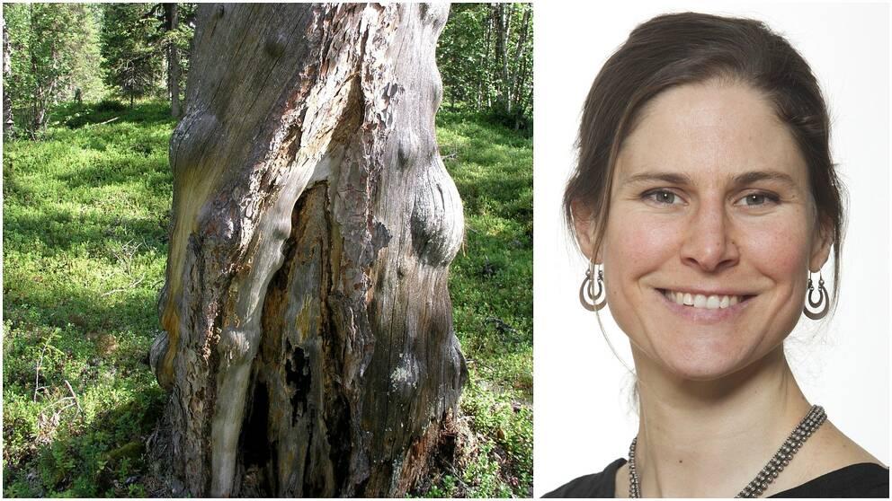 Johanna Sandahl, ordförande i Naturskyddsföreningen