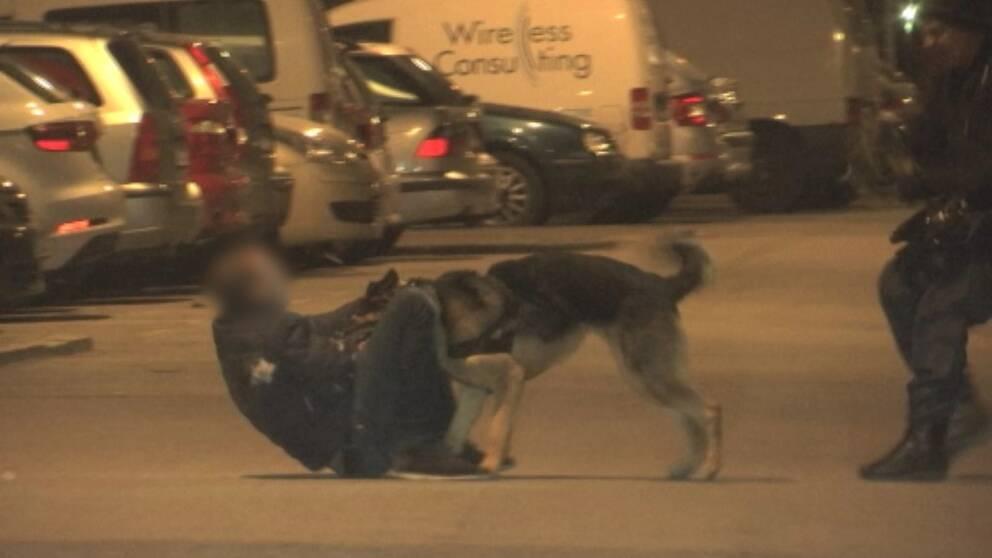 Polisens hund nosade upp tjuven bakom parkerade bilar.