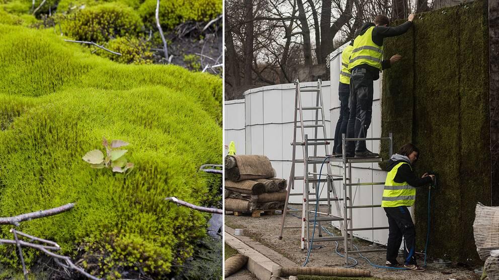I Stuttgart monteras en 100 meter lång vägg av mossa för att suga upp partiklar och dämpa ljudet.