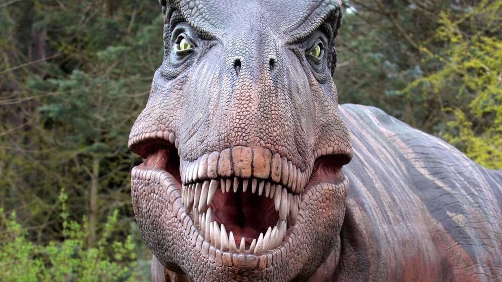 En naturtrogen Tyrannosaurus har återskapats på ett zoo i Seattle.