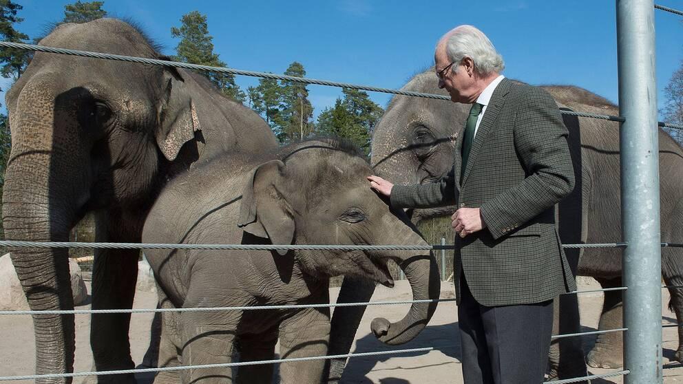 Bild från när Kung Carl XVI Gustaf hälsade på elefanten Namsai på Kolmården 2015.
