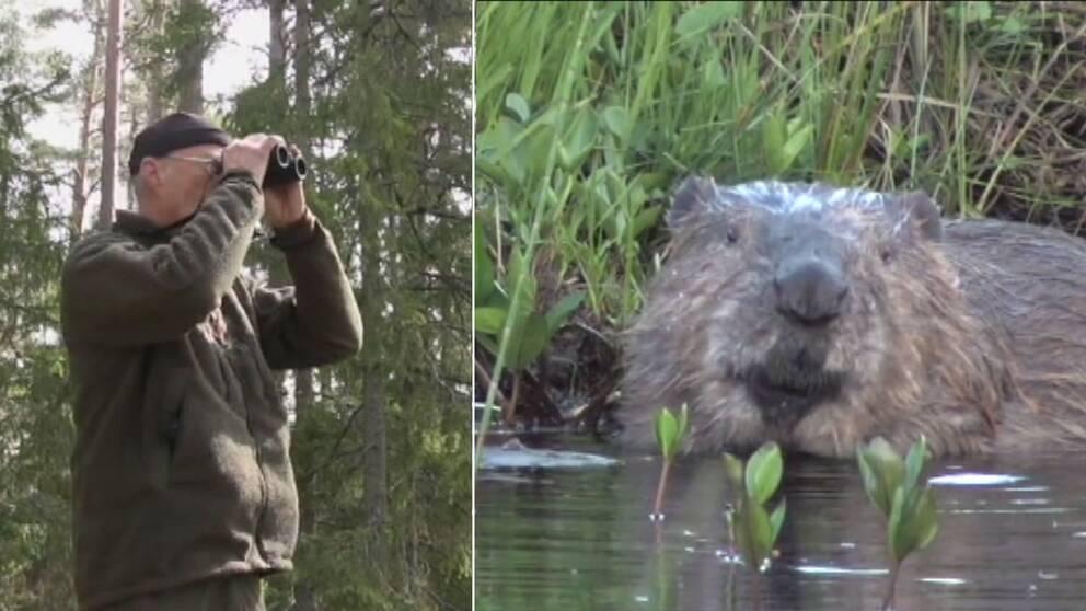 Ole Högberg naturfotograf och en bild hämtad ur filmen om Tiveden