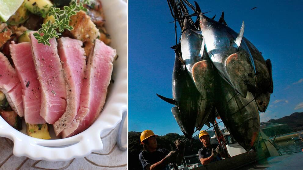 Tonfisk, i maträtt och efter fångst.