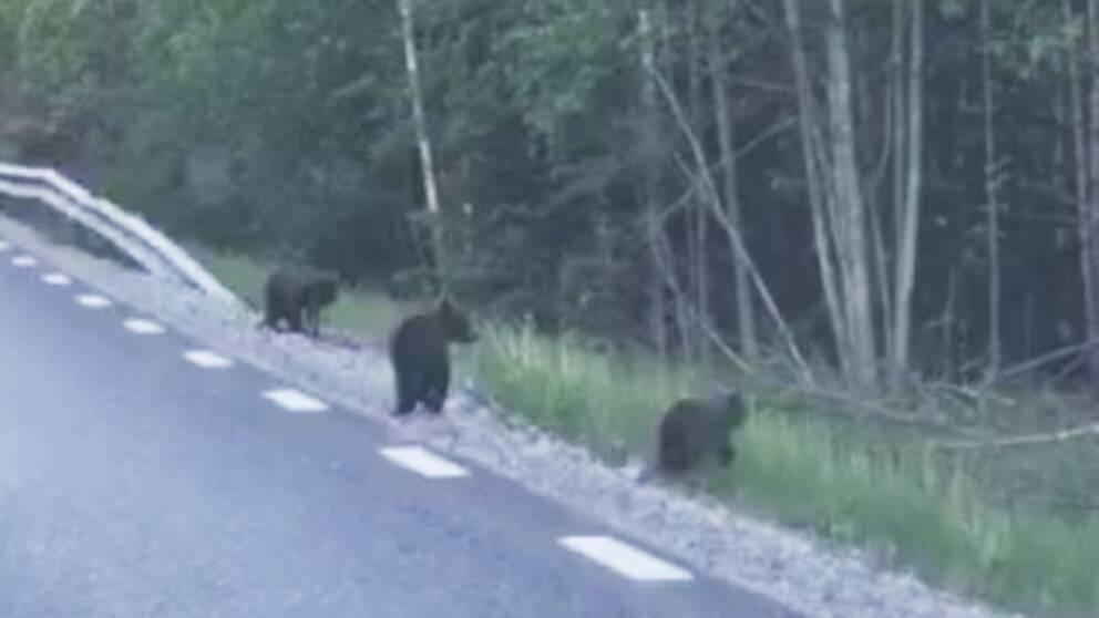 björnungar