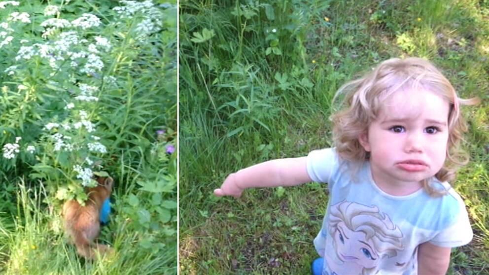 räv med påse skymtar bland grönt och blommor, en liten flicka som pekar