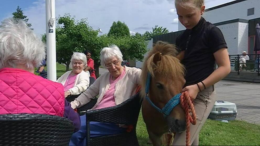 Här åker hästen Myran och hennes djurvänner på turné.