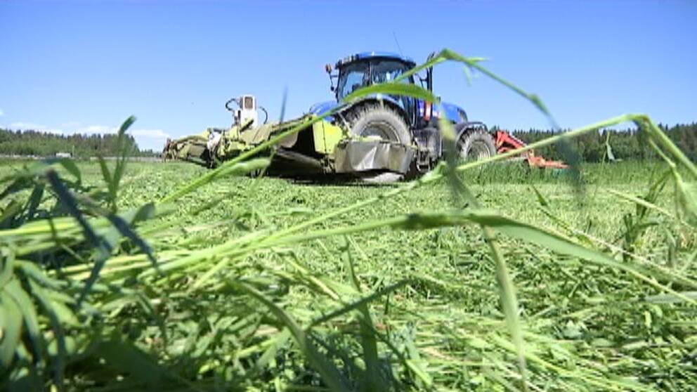 traktor, skörd, bonde, bönder, vallskörd