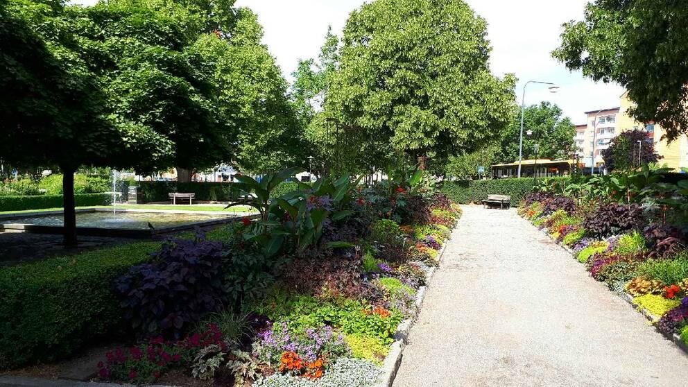 Den andra våldtäkten i Enköpingsparker på en vecka inträffade i natt. Den här gången i Gustav Adolfs-parken.