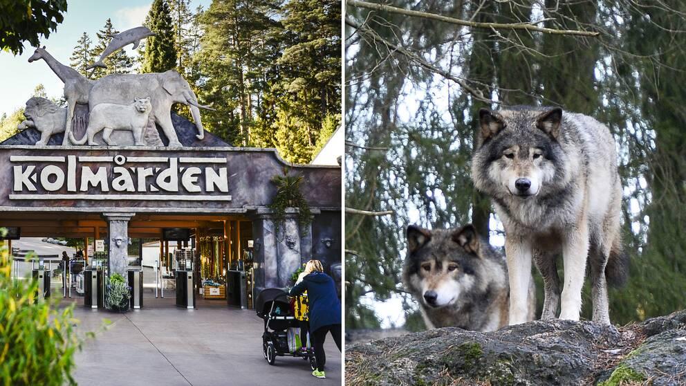 Kolmårdens entré och en bild på två vargar i djurparken.