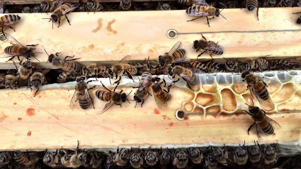 bin bi bikupa biodling södertälje