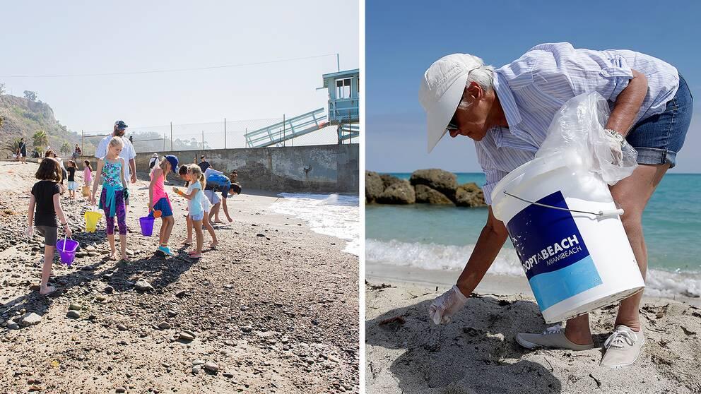 Volontärer plockar skräp på stränder i Kalifornien och Florida.