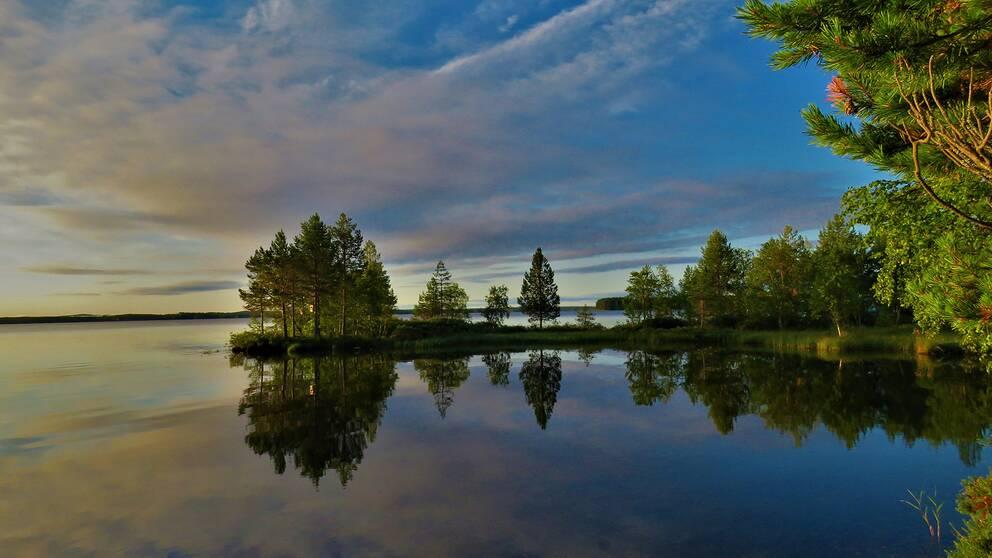 tallar på udde i spegelblank sjö, morgonsol