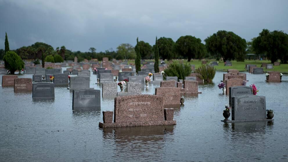 Översvämmad kyrkogård i Pearland, Texas.