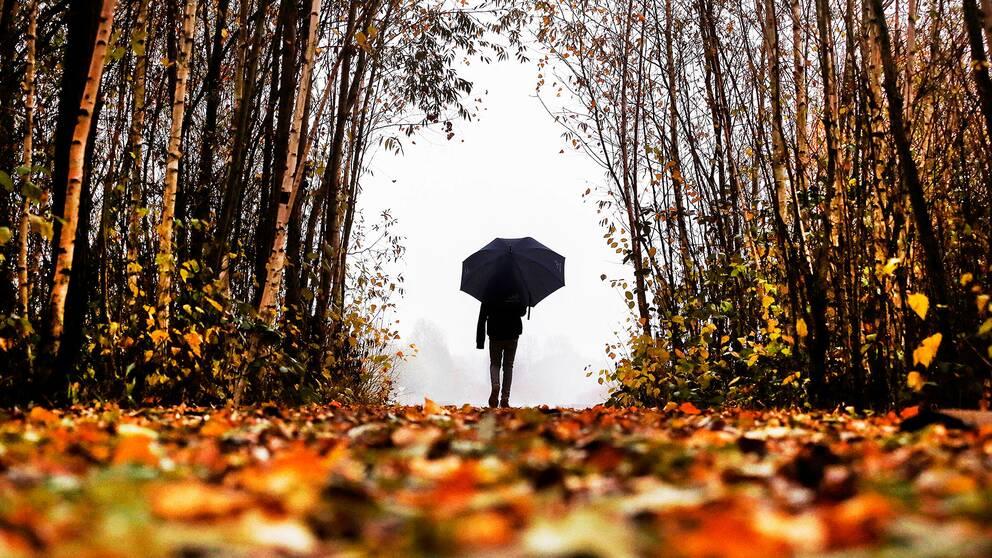 En person med paraply går genom skogen.