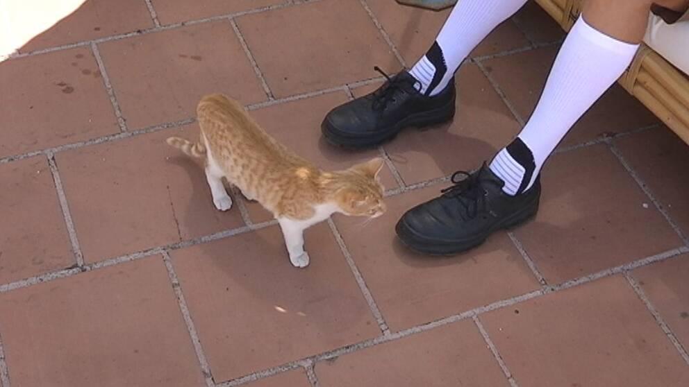 Katt går på stengolv intill ett par fötter.