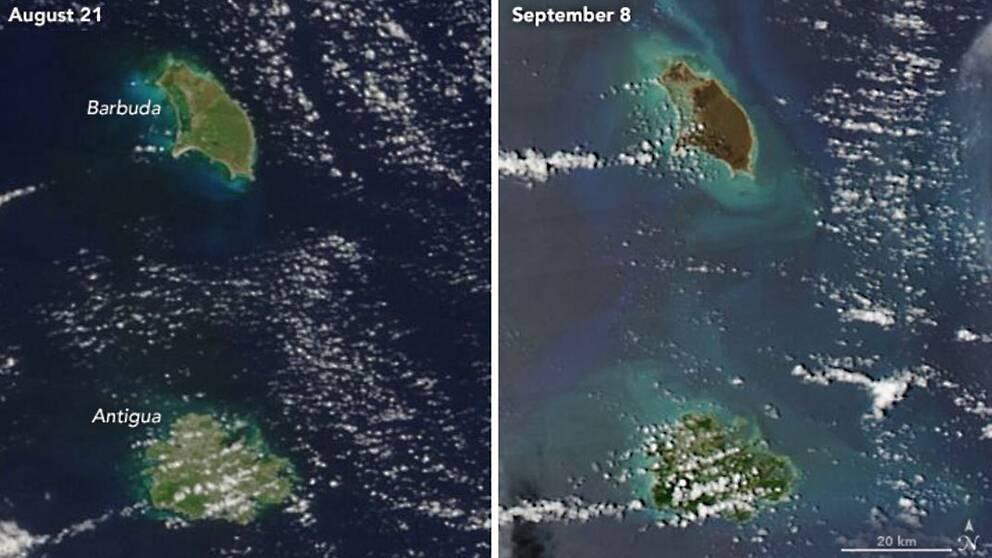 Bilden som är tagen av Nasa earth observatory visar öarna Barbuda och Antigua innan och efter orkanen Irma. Bilden visar hur vegetationen på Barbuda har förstörts.