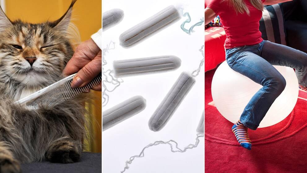 En katt som kammas, tamponger och en kvinna på en pilatesboll
